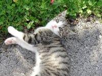 Unsere Katze Nicki