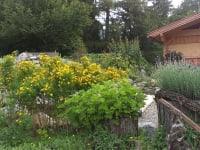 Im Hildegardgarten
