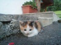 Die Babykatzen