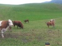 Tiere Weide