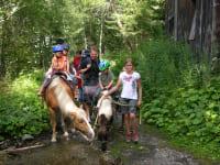 Pferdetrekking1