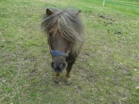 Pony Hugo