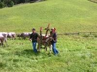 Unsere Kuh hat den Milchstaffel !!!!