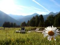Blumenwiese- Tiefhof