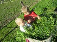 Kinder holen mit Bauer Leo das Gras für die Kühe und Kälber