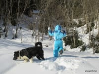 ein echter Wegbleiter - Hofhund Blacky
