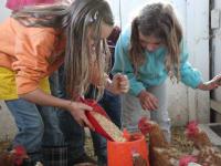da freuen sich die Hühner und die Kinder