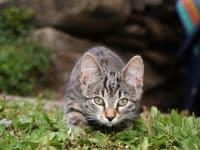 das kleine Kätzchen