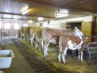 Unsere Tiere am Bauernhof