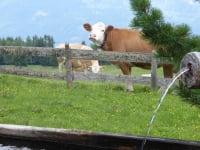 Herrlich frisches Quellwasser erfreut Mensch und Tier