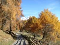 Herbststimmung in Zedlach