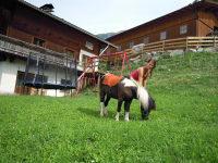 Pony Laura