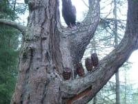 Zedlacher Paradies Baum der Mitte