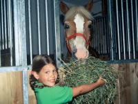 Pferde füttern