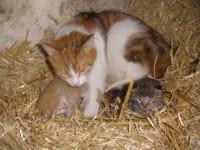 Lilli mit Isabell und Anja