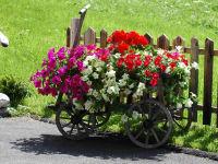 Blumenleiterwagen