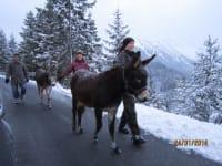 Winterwandern mit Eseln