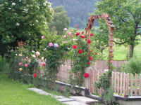 GartenmitRosen