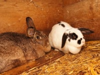 Unsere Kaninchen!