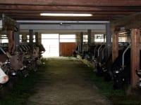 Unser Stall mit unseren Kühen