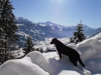 Our dog Lucky, farm holidays, Zell in Ziller Valley