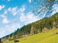 Frühling am Gerlosberg