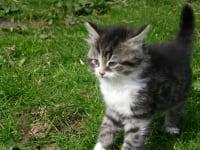 kleine Katze