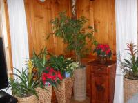 Schöne Blumen für unsere Gäste
