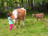Kinder können streichlen auch die Kühe