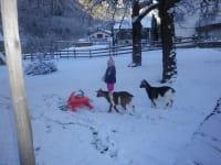 Winterspaziergang mit Flocke, Gretel und Heidi.
