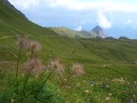 Alpenflora im Montafon
