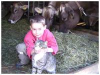 Luca mit Katze Nina, im Hintergrund die Kühe am Heu fressen