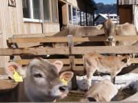 Wintersonne genießen Groß und Klein auch bei Tieren.