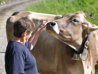 Streicheleinheiten für die Kühe