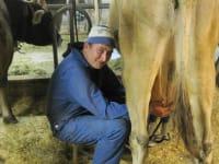 Tobias beim Melken.