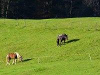viel Auslauf für unsere Pferde