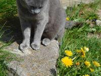 Unsere Katze Waltraud