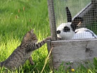 Katzenbaby Karl besucht Kaninchen Paula