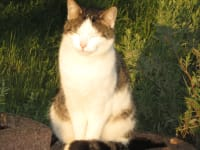 Katze Willi