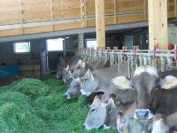 Ein neues Wohlbefinden auch für unsere Kühe!