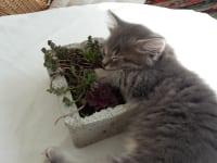 Kleine Kätzchen zu haben ist ein schönes Erlebnis