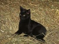 Gismo, eine unserer Katzen