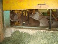 Blanka und Zanobia genießen die abendliche Ruhe im Stall
