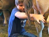 Lukas beim Kühe melken