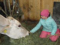 Annabelle beim Kühe füttern
