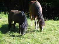 Ponys Katinka und Jacky