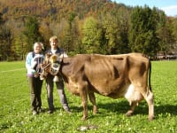 103000kg Milch Kuh