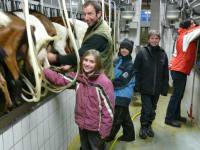Beim Melken im Ziegenstall