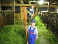 Im Stall beim Füttern