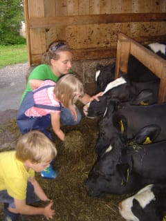 Feeding and stroking calves
